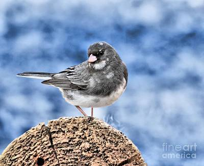 Photograph - Dark-eyed Junco by Debbie Stahre