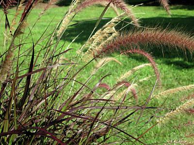 Photograph - Dark Feather Grass by Michele Wilson