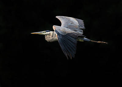 Photograph - Dark Flight by Art Cole