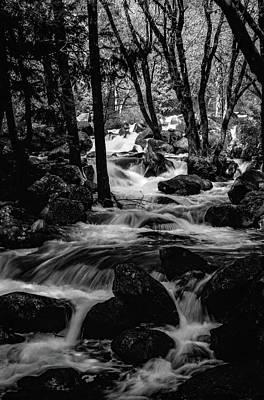 Dark Forest Bright Water Art Print