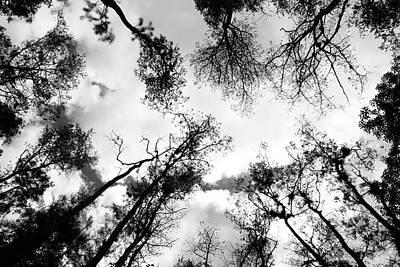 Dark Forest Print by Janzgrossetkino