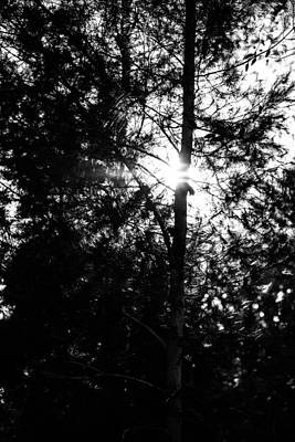 Photograph - Dark Forest by Mark Perelmuter