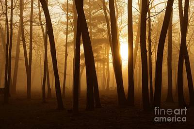 Dark Forest Art Print by Terri Gostola