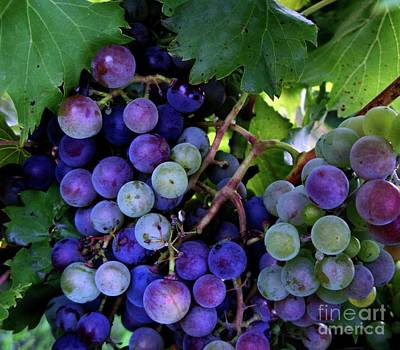 Art Print featuring the photograph Dark Grapes by Carol Sweetwood