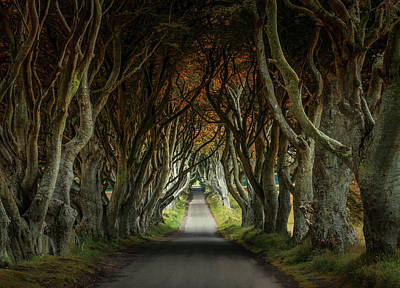 Photograph - Dark Hedges Beech Alley  by Jaroslaw Blaminsky