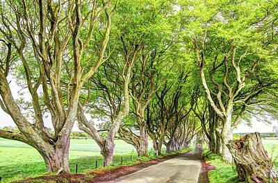 Ballymoney Photograph - Dark Hedges, Game Of Thrones by Bob Cuthbert