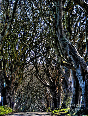 Photograph - Dark Hedges Hdr by Nina Ficur Feenan