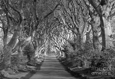 Dark Hedges Ireland Art Print