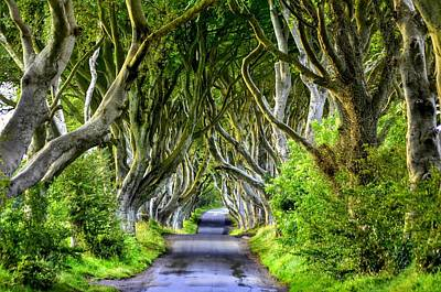 Dark Hedges Art Print
