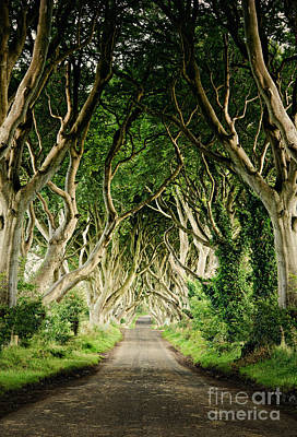 Armoy Photograph - Dark Hedges by Michelle McMahon