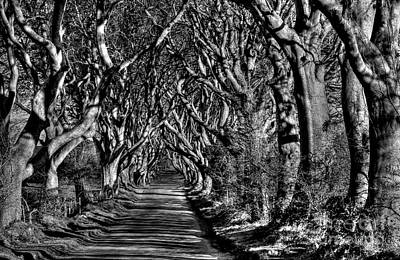 Photograph - Dark Hedges Mono by Nina Ficur Feenan