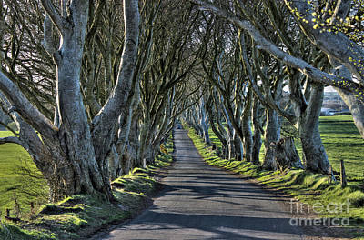 Photograph - Dark Hedges by Nina Ficur Feenan