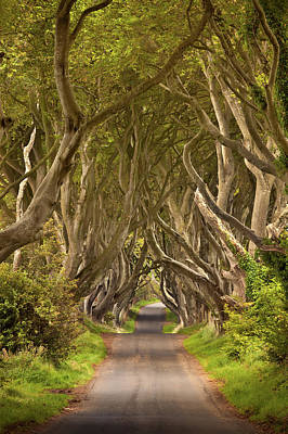 Ballycastle Photograph - Dark Hedges by Pawel Klarecki