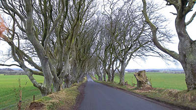 Photograph - Dark Hedges by Susan Jensen