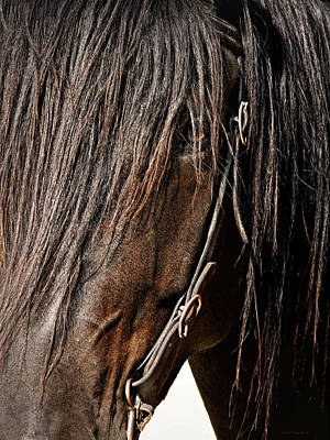Photograph - Dark Horse And Bridle by Jennie Marie Schell
