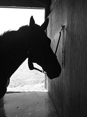 Photograph - Dark Horse by Joseph Caban