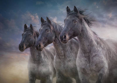 Photograph - Dark Horses by Debby Herold