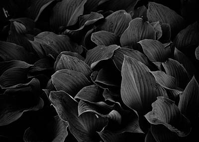 Photograph - Dark Leaves by Tim Good
