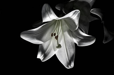 Photograph - Dark Lilly by Ian Thompson