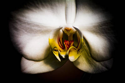 Dark Orchid One Art Print by John Ater