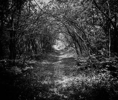 Photograph - Dark Path by Marvin Borst