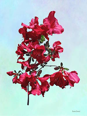 Photograph - Dark Pink Azaleas by Susan Savad