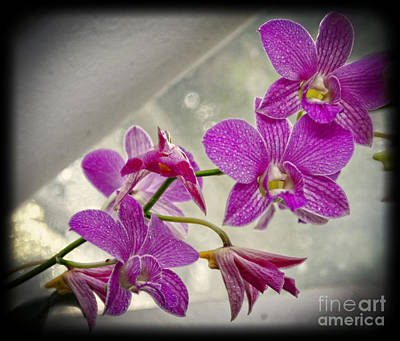 Photograph - Dark Pink Orchids All In A Row by Eva Thomas