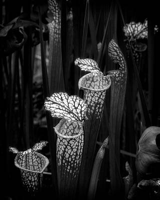 Photograph - Dark Pitchers by Alan Raasch