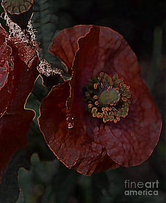 Photograph - Dark Poppy by Diane montana Jansson