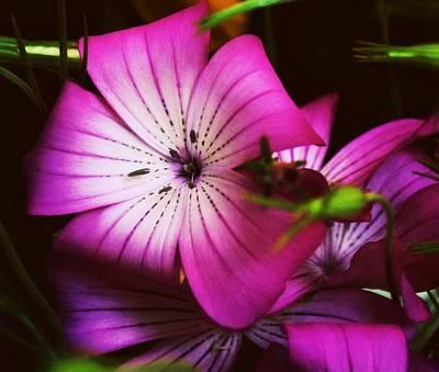 Purple Flowers Digital Art - Dark Purple by Cathie Tyler