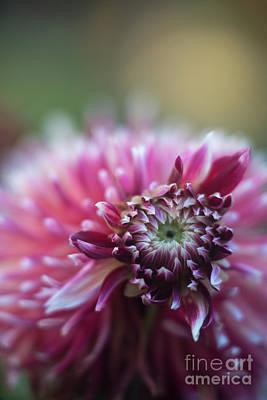 Photograph - Dark Red Eye Of A Dahlia by Mike Reid