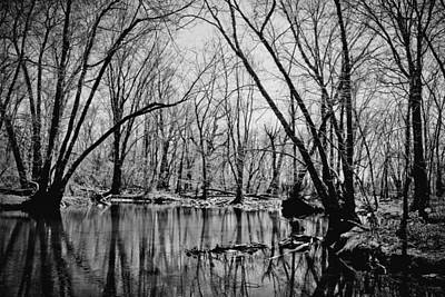 Photograph - Dark Reflections by Colleen Kammerer