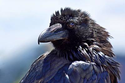 Photograph - Dark Reflections - Raven by KJ Swan