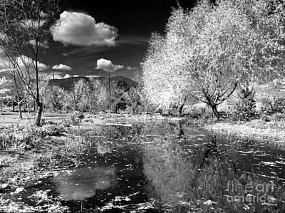 Photograph - Dark Reflections by Tara Turner