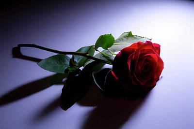 State Love Nancy Ingersoll - Dark Rose by Nicholas Evans