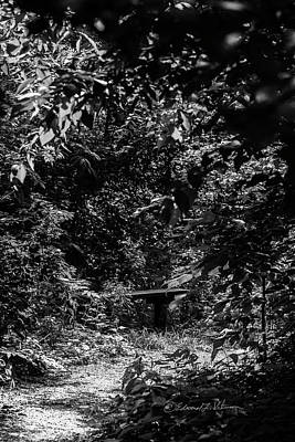 Photograph - Dark Summer Woods by Edward Peterson