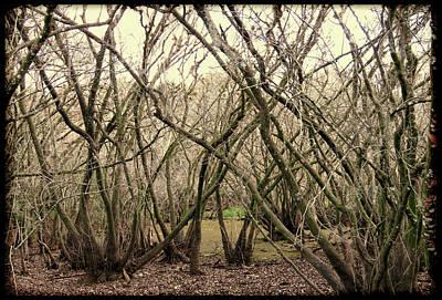 Photograph - Dark Swamp by Rosalie Scanlon