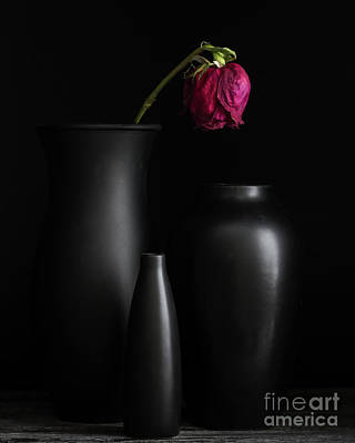 Photograph - Dark Trio by Linda Hoye