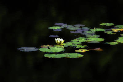 Photograph - Dark Water Lily by Bill Wakeley