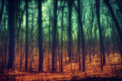 Photograph - Dark Woods by Lilia D