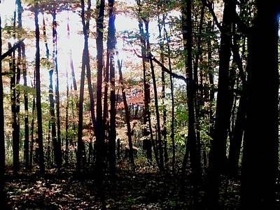 Photograph - Dark Woods by Stephanie Moore