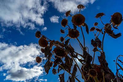 Photograph - Darkening Skies by Derek Dean