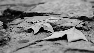 Photograph - Darklights by Andrea Mazzocchetti