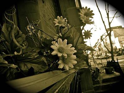 Photograph - Darling Daisies  by Brynn Ditsche