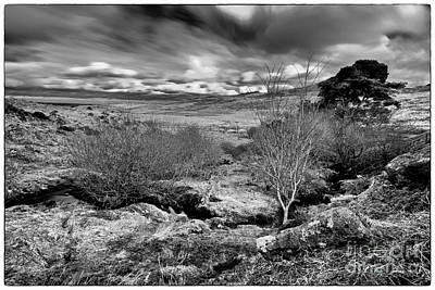 Photograph - Dart Moor by Gary Bridger