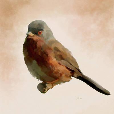 Painting - Dartford Warbler - Sylvia Undata by Bamalam  Photography