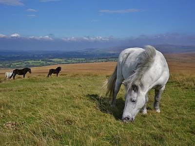 Photograph - Dartmoor Ponies On Gibbet Hill Dartmoor Devon by Richard Brookes