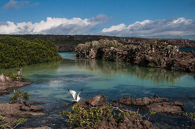 Photograph - Darwin Bay     Genovesa Island      Galapagos Islands by NaturesPix