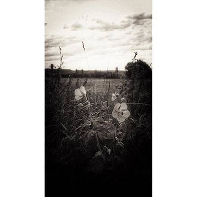 Monochrome Photograph - Das Blühende Leben  #lumia1520 #nokia by Mandy Tabatt