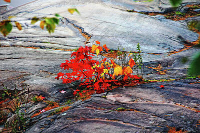 Photograph - Dash Of Red And Gold by Debbie Oppermann